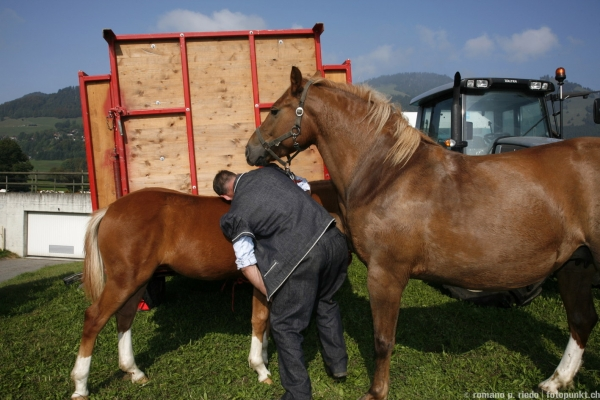 http://www.romanoriedo.ch/files/gimgs/19_chevaux9916.jpg