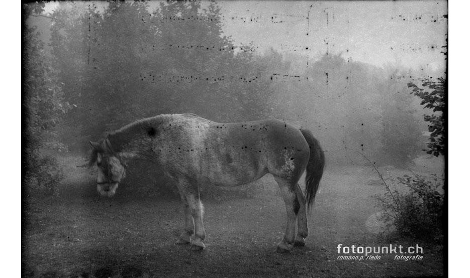 http://www.romanoriedo.ch/files/gimgs/6_pferd-flou-old-film-s.jpg